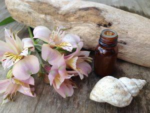 Homöopathie für Jedermann – Seminar, Kurs, Laienhömöpathiekurs